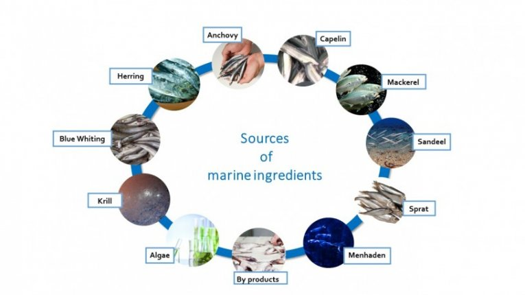 Sources of Marine Ingredients